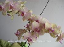 Florada anual